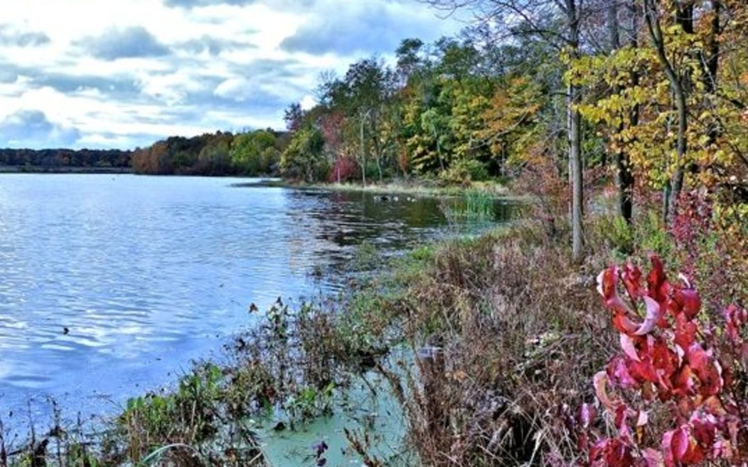 Spotlight on the Celery Bog Nature Area and Lilly Nature Center