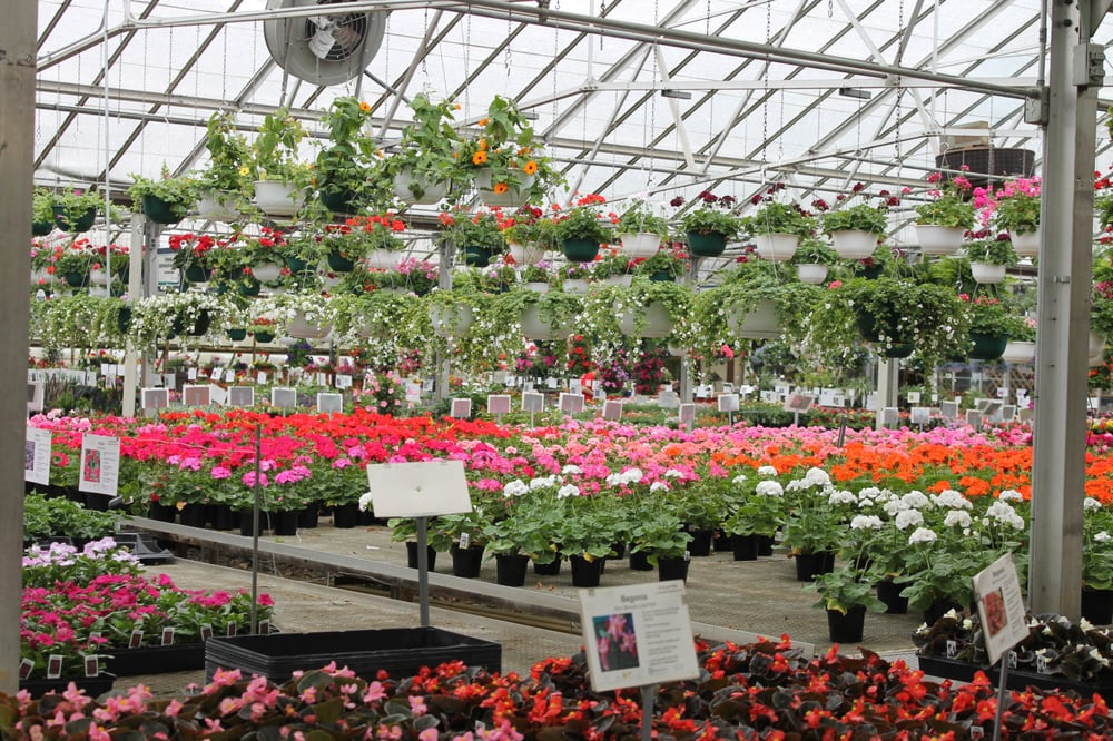 Spotlight on Bennett's Greenhouse