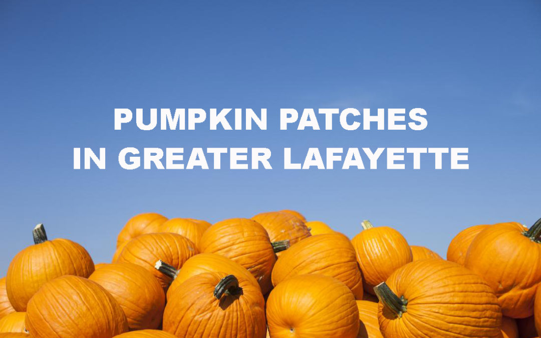 Pumpkin Patches in Greater Lafayette!