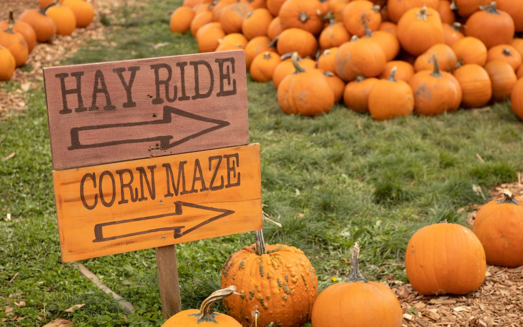 Pumpkin Patches and Corn Mazes